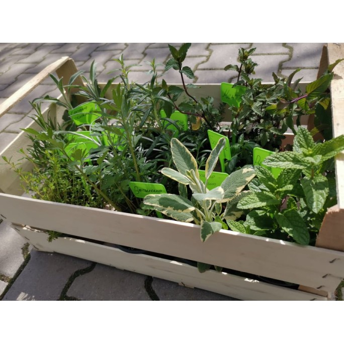 Комплект подправки за всеки градинар с табелки - 12 бр. билки