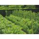 Мрежа за краставици и други катерливи растения