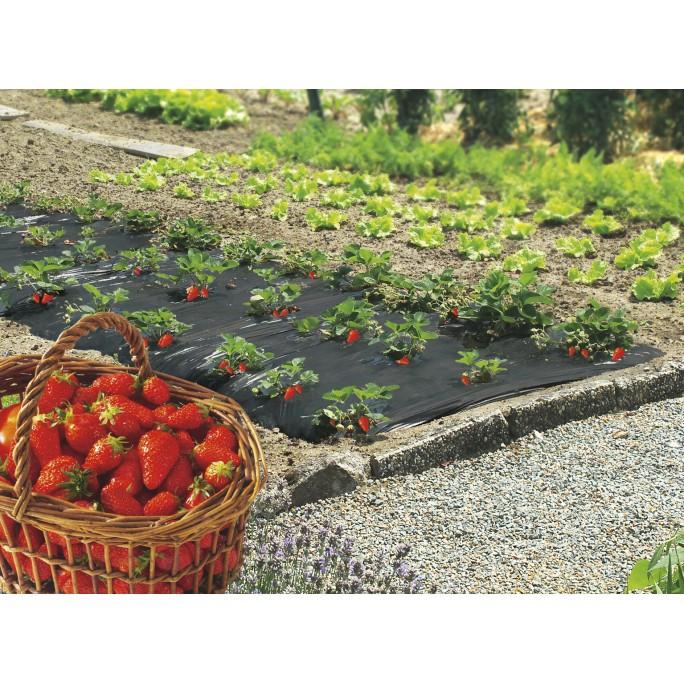 Фолио за предпазване (мулчиране) на ягоди, салати и др.