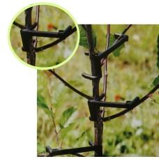 Кламери за оформяне на короната на различни видове декоративни и овощни дървета