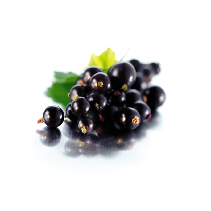 Касис (Ribes nigrum) - черно френско грозде