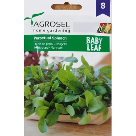 Бейби семена за Манголд - микро растение