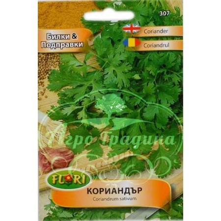 Кориандър / Coriandrum sativum