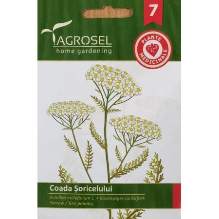 Семена за билка Бял равнец / Achillea millefolium