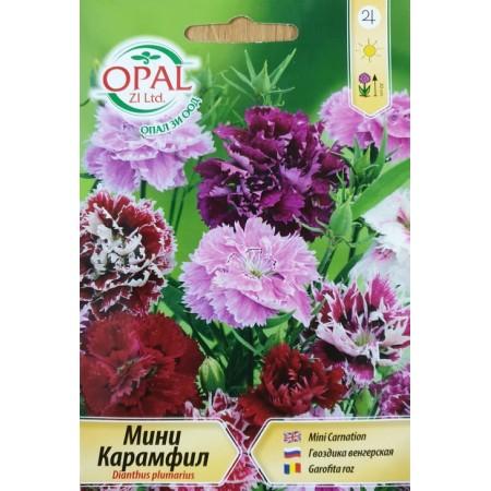 Карамфил мини / Dianthus plumarius