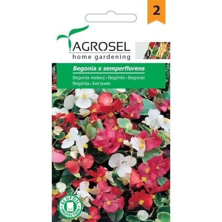 Семена за Бегония микс /  Begonia x semperflorens