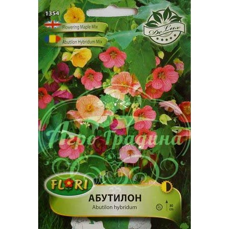 Абутилон (Стаен клен) микс / Abutilon hybridum mix
