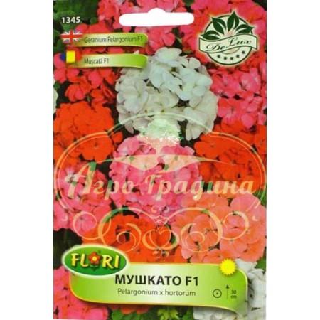 Мушкато F1 / Pelargonium x hortorum