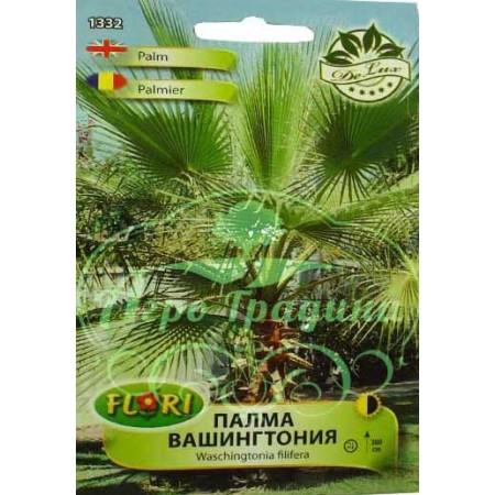 Палма Вашингтония / Washingtonia filifera