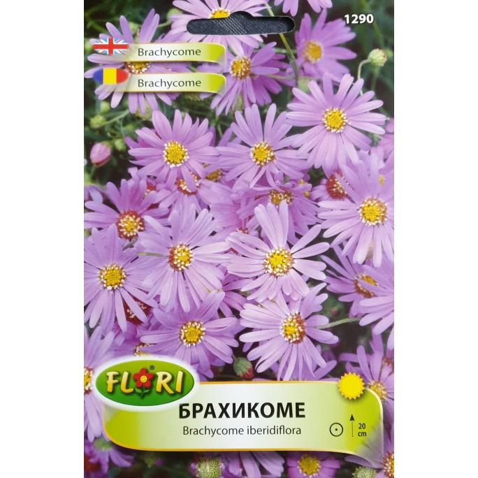 Брахикоме / Brachycome iberidiflora