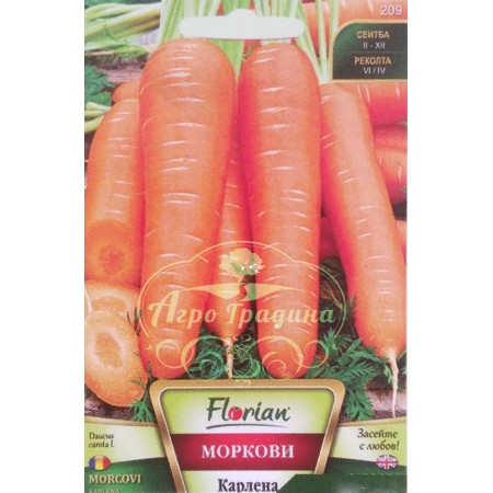 Моркови Карлена