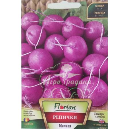 Репички Малага (лилави)