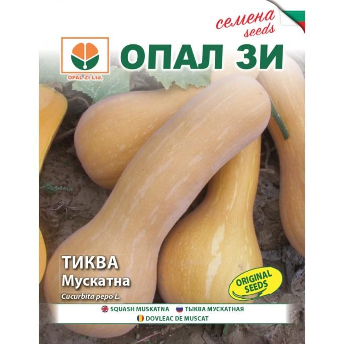 Тиква Мускатна