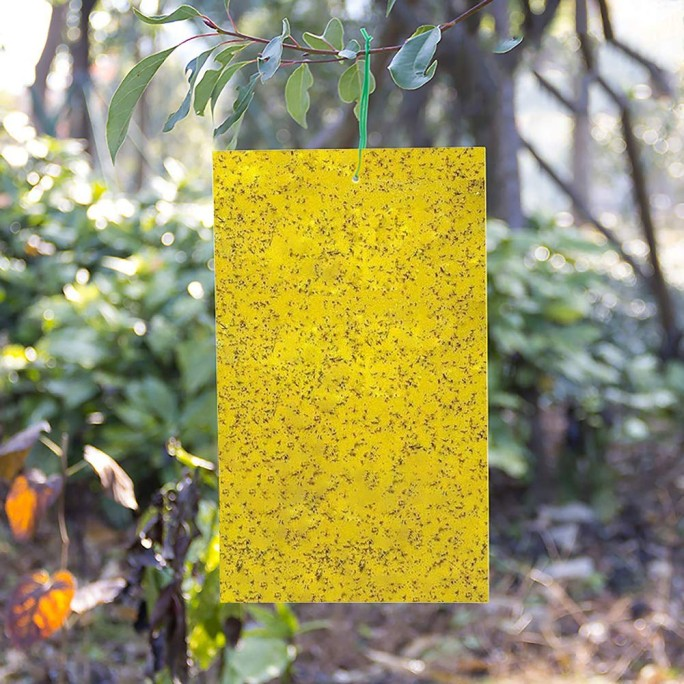 Жълти лепливи табла против белокрилка 10бр в пакет