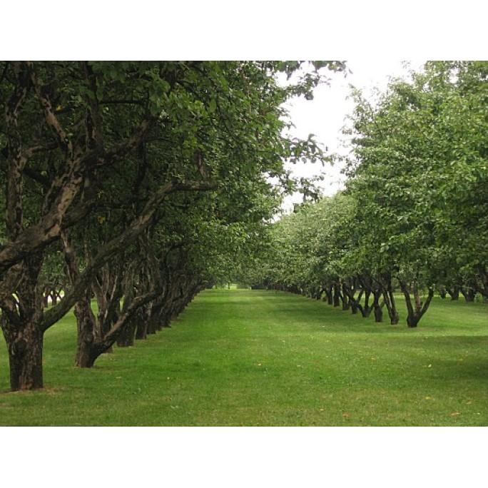 Тревна смес - подходяща за мулчиране за лозя и овощни градини
