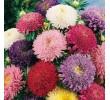 Саксийни и градински цветя